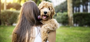 Owning pets in sectional title schemes in South Africa